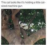 Cat With Machine Gun Joke