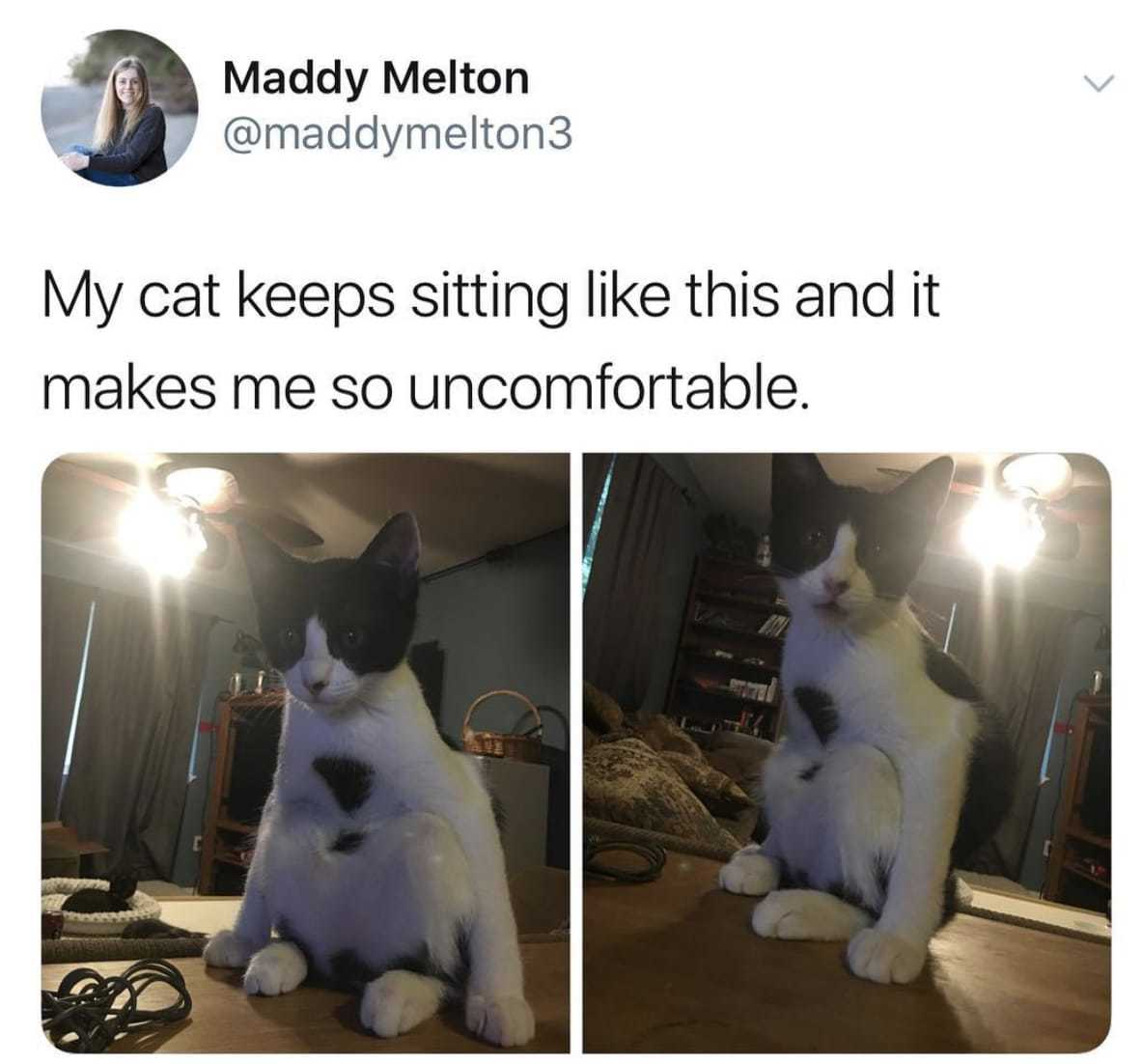Cat Sitting Weirdly Joke