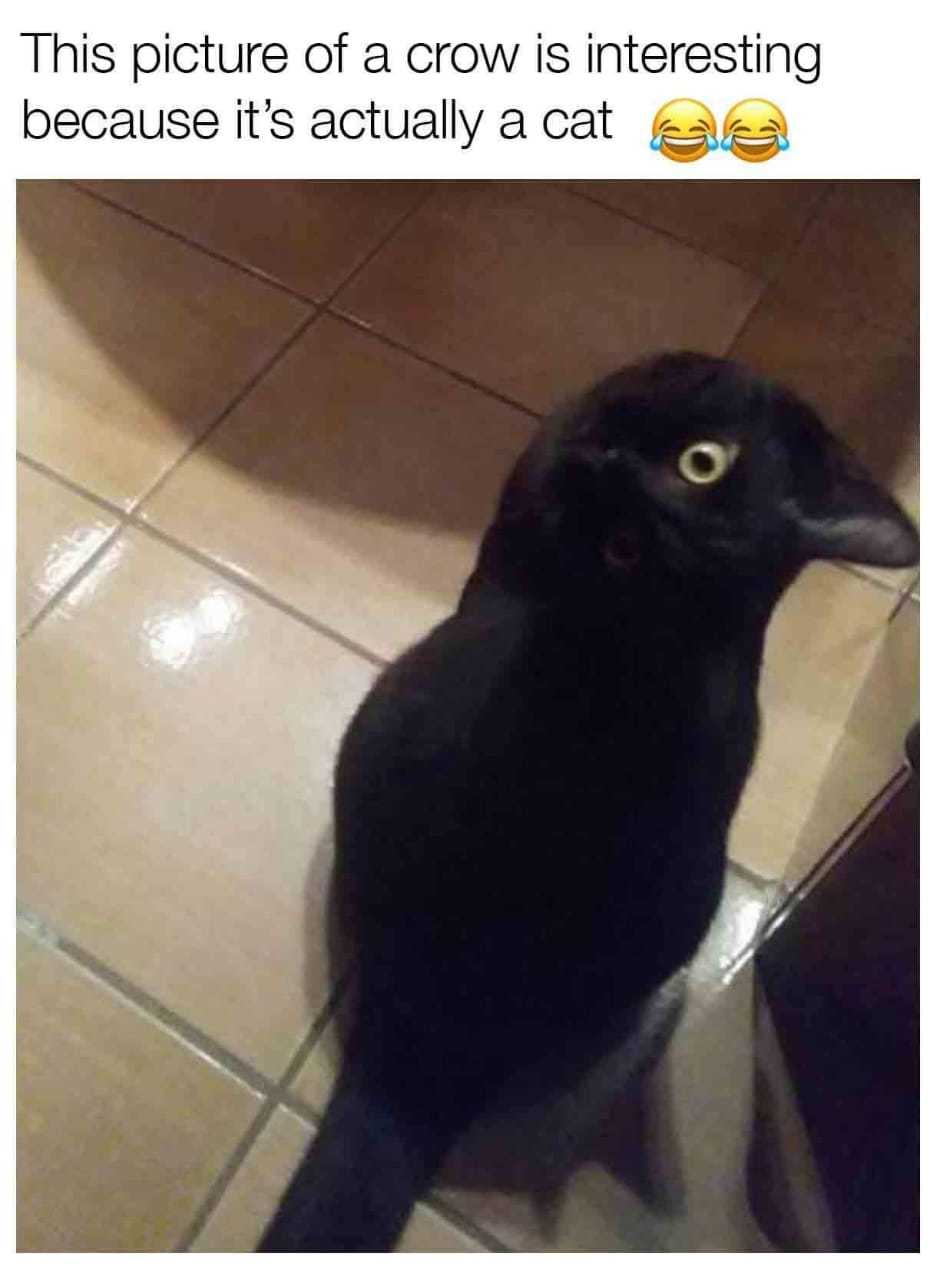 Crow Cat